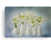 Narcissus 'Paperwhites' Canvas Print