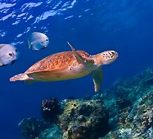 Sea Turtle and Entourage by ZeamonkeyImages