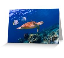 Sea Turtle and Entourage Greeting Card