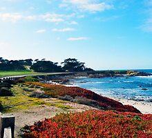 17 Mile Drive Shoreline by BarbaraSnyder