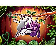 Opossum and Bat in Love Photographic Print
