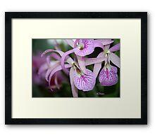 Longwood Gardens Orchid Framed Print