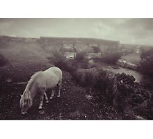 Foggy day in Dartmoor Photographic Print