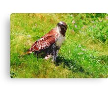 Red Tail Hawk Digital Painting Canvas Print
