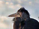 Blue Heron by Irina777