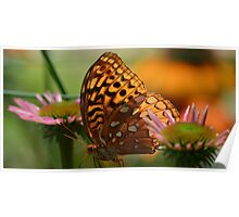 Light Speckled Wings Poster