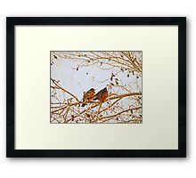 The last berry for you, my valentine. Framed Print