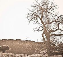 Buffalo Breath by Bo Insogna