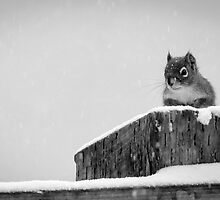 Red Squirrel in Black and White by TheCopaceticEye