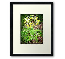 Cowslip Framed Print