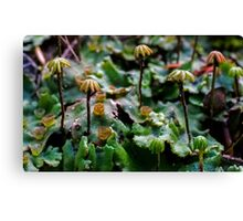 Fruiting Bodies Canvas Print