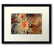 Flowers of The Sea Framed Print