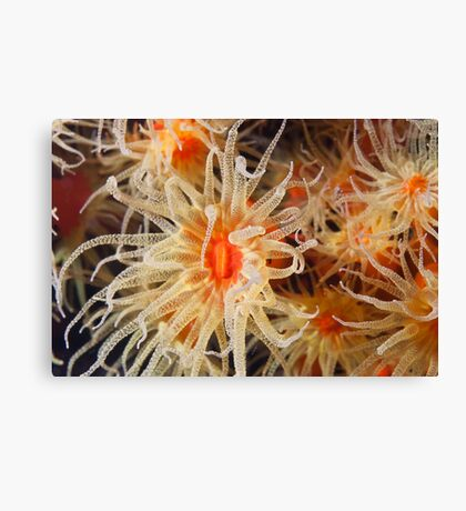 Flowers of The Sea Canvas Print