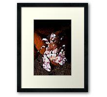Small Wonder of The Ocean Framed Print