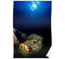 Clownfish Solitude Poster