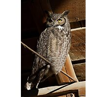 Great Horned Owl: First Light in the Hay Loft Photographic Print
