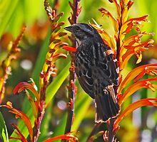 Bird on Flowers by Darrick Kuykendall
