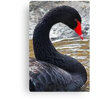 Curved Black Swan Canvas Print
