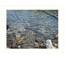 Crystal Clear Water - Stanley, Idaho Art Print