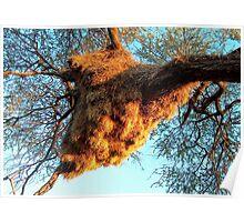 Sociable Weaver Bird Nest - Etosha - Versamelvoëlnes Poster