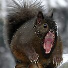 My nuts are cold! by Randy Turnbow