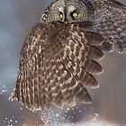 The Caped Crusader - Great Gray Owl. by Daniel Cadieux