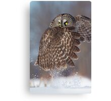 The Caped Crusader - Great Gray Owl. Canvas Print