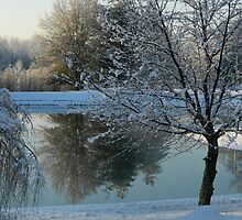 Frozen Pond Reflections ^ by ctheworld