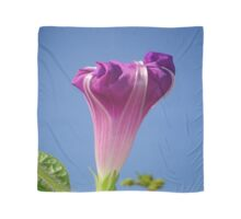 Deep Magenta Morning Glory Flower Bud Against Sky Scarf