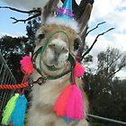 Llama by foxhill
