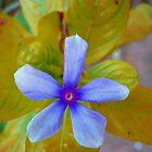 The Wonder Spring Flower On the Mountain  by NikunjVasoya