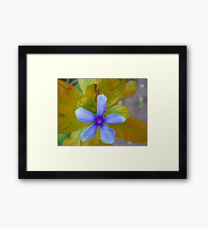 The Wonder Spring Flower On the Mountain  Framed Print