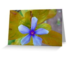 The Wonder Spring Flower On the Mountain  Greeting Card