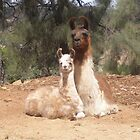 Llama and Cria by foxhill