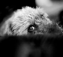 Cute Pup Sneek A Peek by Natalie Kinnear