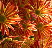 Mums for iPad by Michael Andersen