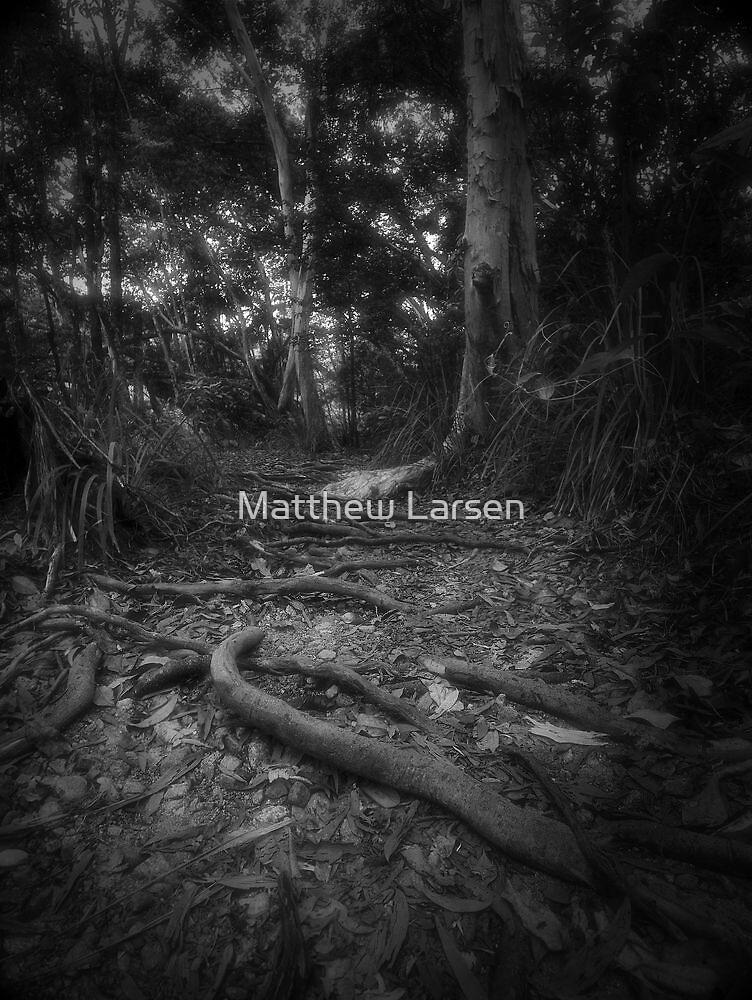 Escape from the dark forest #2 by Matthew Larsen