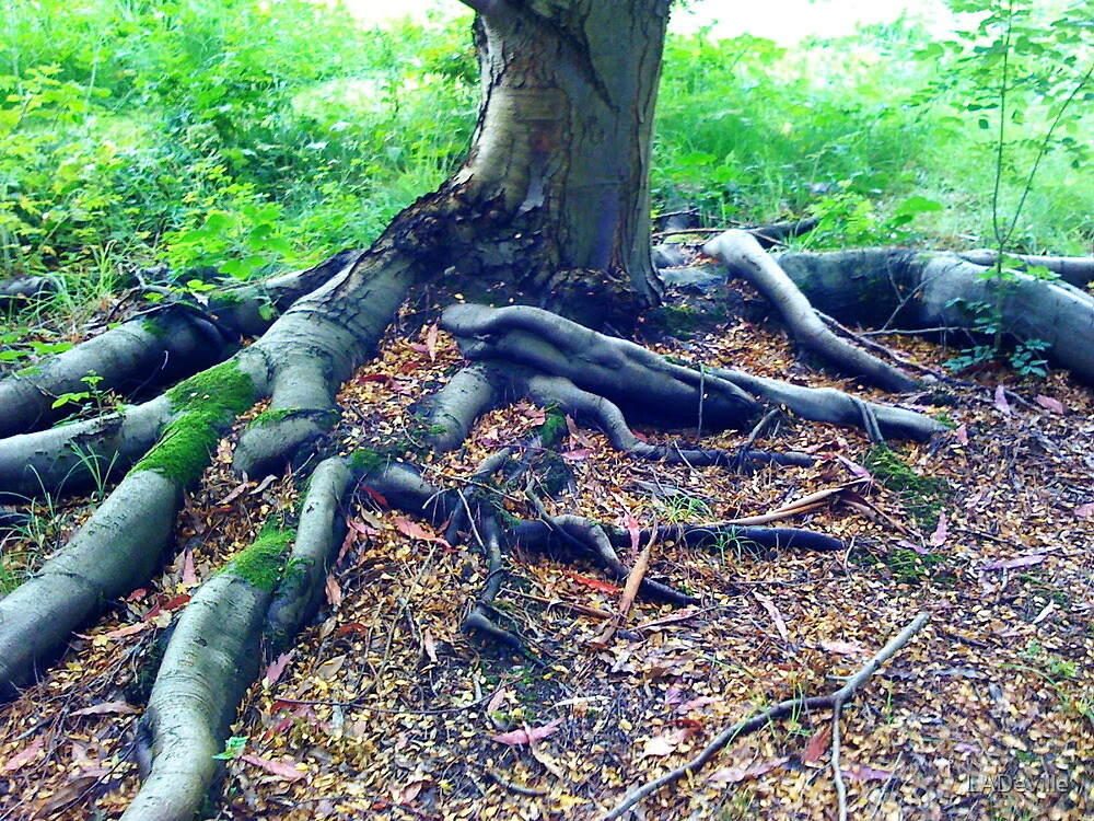 Roots by LADeville