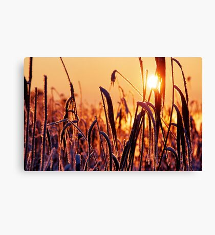 The golden cold Canvas Print