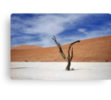 Shake your dreads  Canvas Print