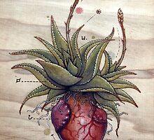 Aloe Glauca Heart by Fay Helfer
