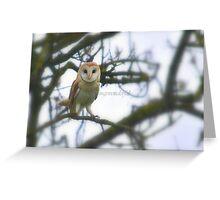 The Barn owl (Nature birds) Greeting Card