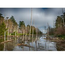 The Swamp on Cabbage Island Photographic Print