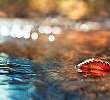 Leaf 1 by ThomsonStudios