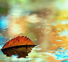 Leaf 2 by ThomsonStudios