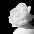 Moss rose in bone china by Ronny Falkenstein
