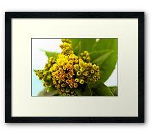 Golden Rod - Solidago Wild Flower  Framed Print