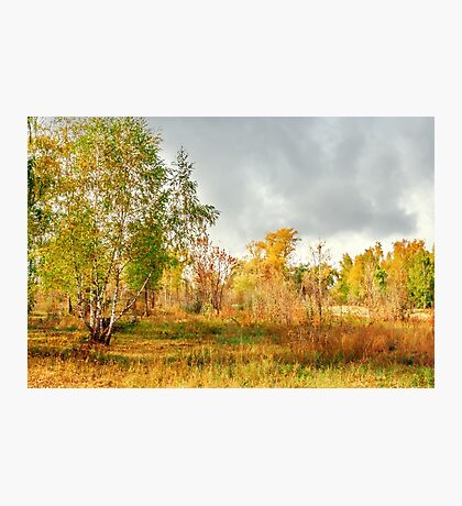 Birch on the edge of the forest Photographic Print