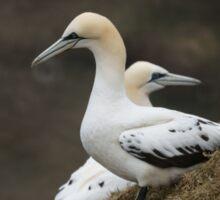 We don't see eye to eye -- Northern Gannets Sticker