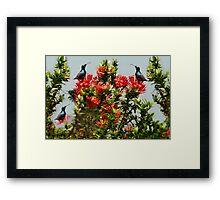 Ƹ̴Ӂ̴Ʒ PRECIOUS BIRDS Ƹ̴Ӂ̴Ʒ Framed Print